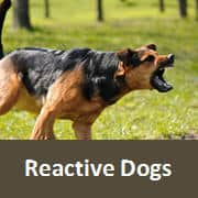Reactive Dog Classes