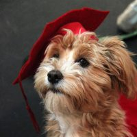smartdog-grad