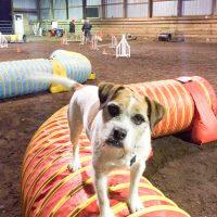 indoor-dog-barn